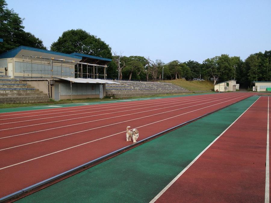 temiya_sports_field